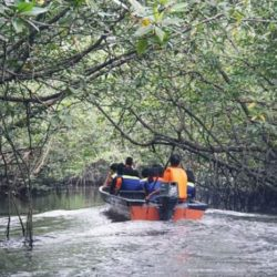 wisata hutan mangrove di Bintan